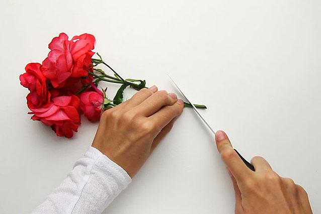 cắt chéo phần cành hoa sẽ giúp hoa tươi lâu