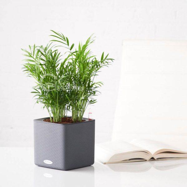 Nên trồng cây gì trước nhà để hợp phong thuỷ, hút tài lộc?