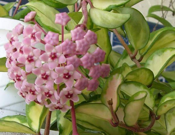 Các loại hoa lan dễ trồng làm đẹp cho nhà bạn