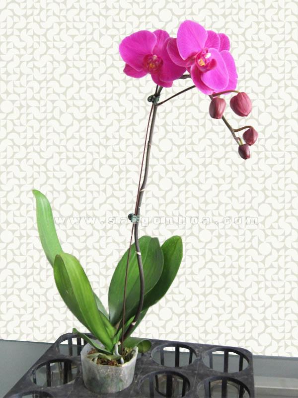 Các kiểu cắm hoa lan đẹp cho người mới