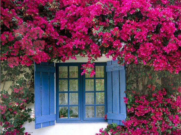 Các loại hoa dễ trồng trong vườn cho nhà thêm xinh
