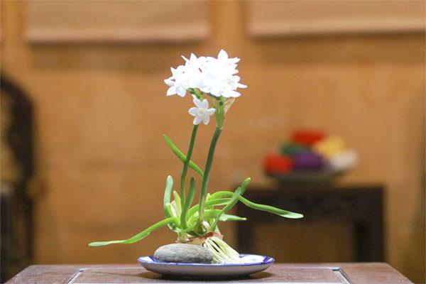các loại hoa trồng bằng củ