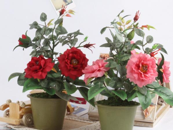 Các loại hoa trồng trong chậu nhỏ, thử ngay nào!