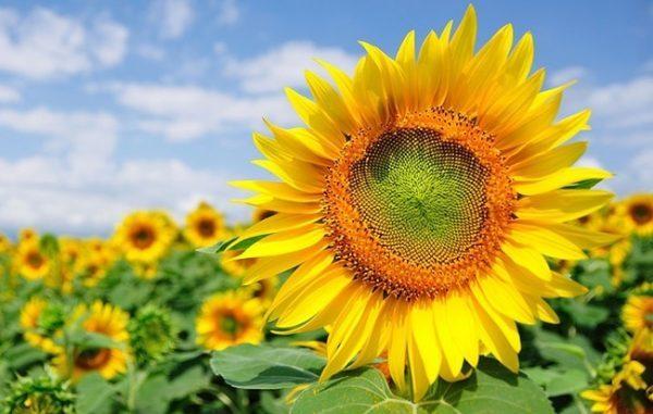 Những loài hoa tượng trưng cho sự bắt đầu tốt đẹp