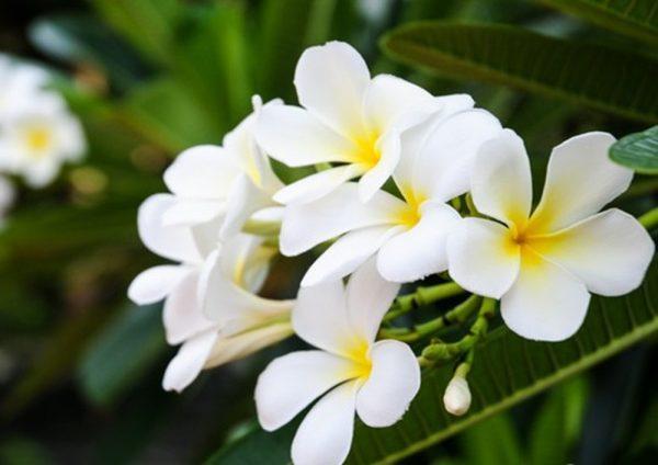 Điểm danh những loại hoa màu trắng đẹp nhất