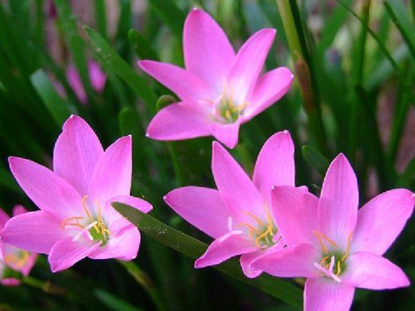 Ý nghĩa của hoa huệ trang nhã