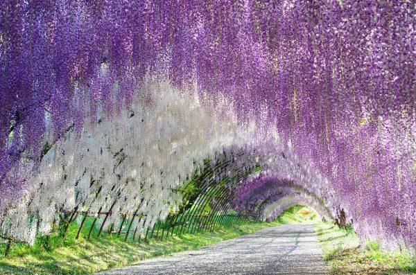 Chiêm ngưỡng những vườn hoa đẹp nhất thế giới