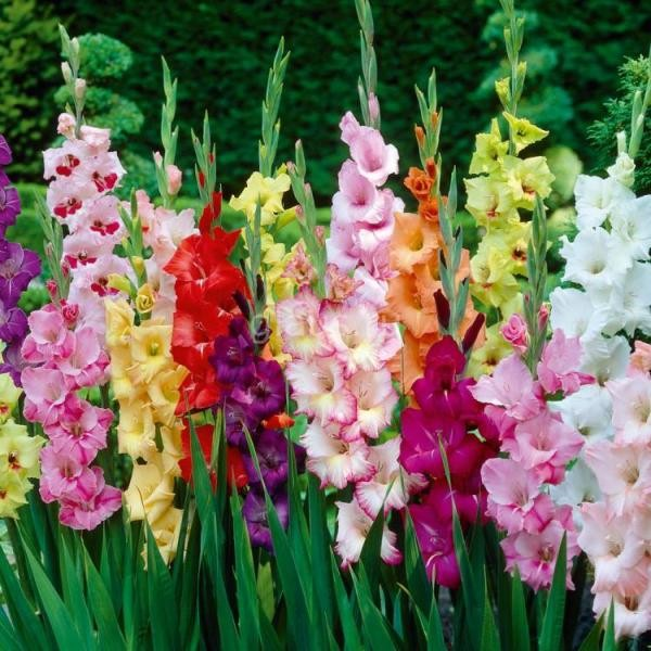 Những loài hoa thể hiện sự tôn kính
